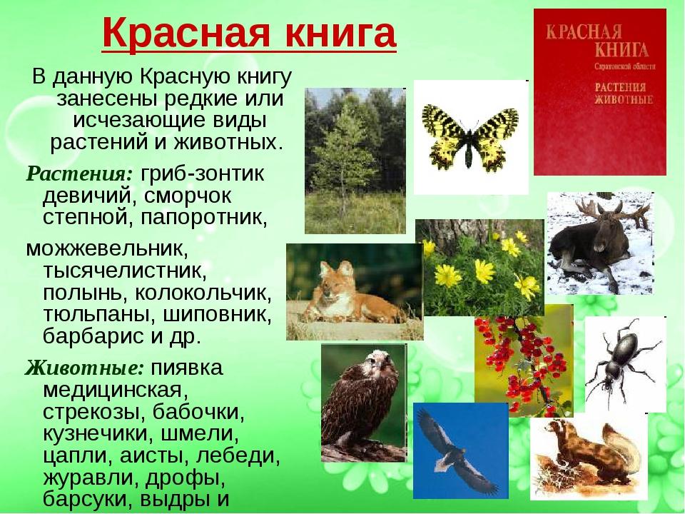 Красная книга В данную Красную книгу занесены редкие или исчезающие виды раст...