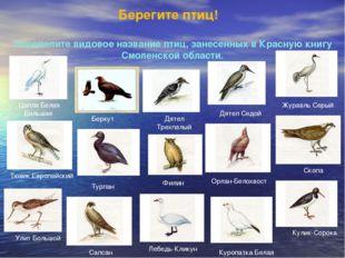 Берегите птиц! Определите видовое название птиц, занесенных в Красную книгу С