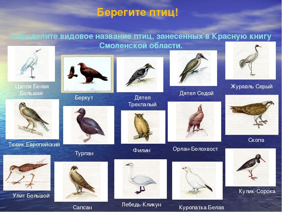 Берегите птиц! Определите видовое название птиц, занесенных в Красную книгу С...