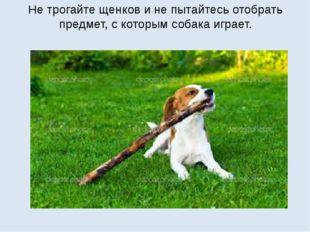 Не трогайте щенков и не пытайтесь отобрать предмет, с которым собака играет.