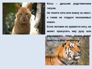Коты – дальние родственники тигров. Не тяните кота или кошку за хвост, а такж