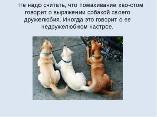 Не надо считать, что помахивание хвостом говорит о выражении собакой своего