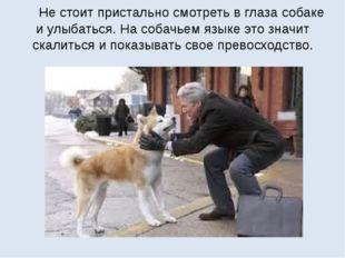 Не стоит пристально смотреть в глаза собаке и улыбаться. На собачьем языке э