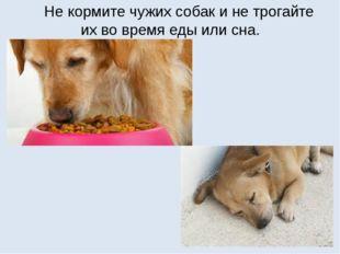 Не кормите чужих собак и не трогайте их во время еды или сна.