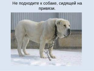 Не подходите к собаке, сидящей на привязи.