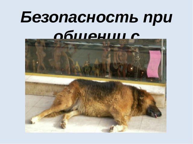 Безопасность при общении с животными