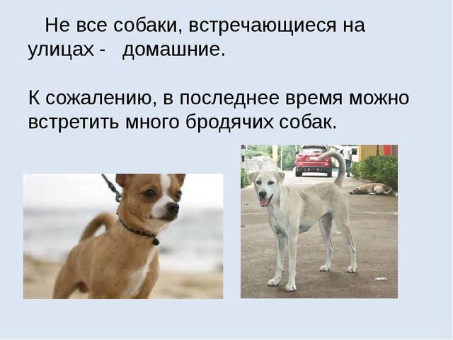 Не все собаки, встречающиеся на улицах - домашние. К сожалению, в последнее...