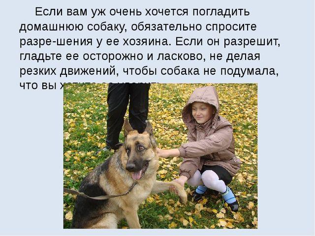 Если вам уж очень хочется погладить домашнюю собаку, обязательно спросите ра...