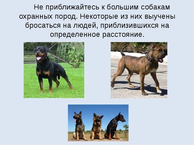 Не приближайтесь к большим собакам охранных пород. Некоторые из них выучены...