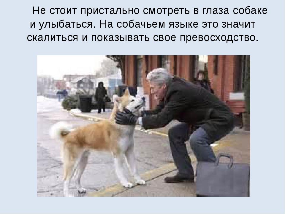 Не стоит пристально смотреть в глаза собаке и улыбаться. На собачьем языке э...