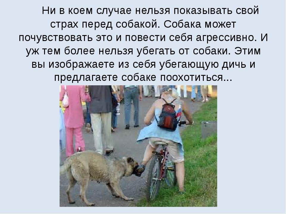 Ни в коем случае нельзя показывать свой страх перед собакой. Собака может по...