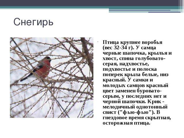 Снегирь Птица крупнее воробья (вес 32-34 г). У самца черные шапочка, крылья и...