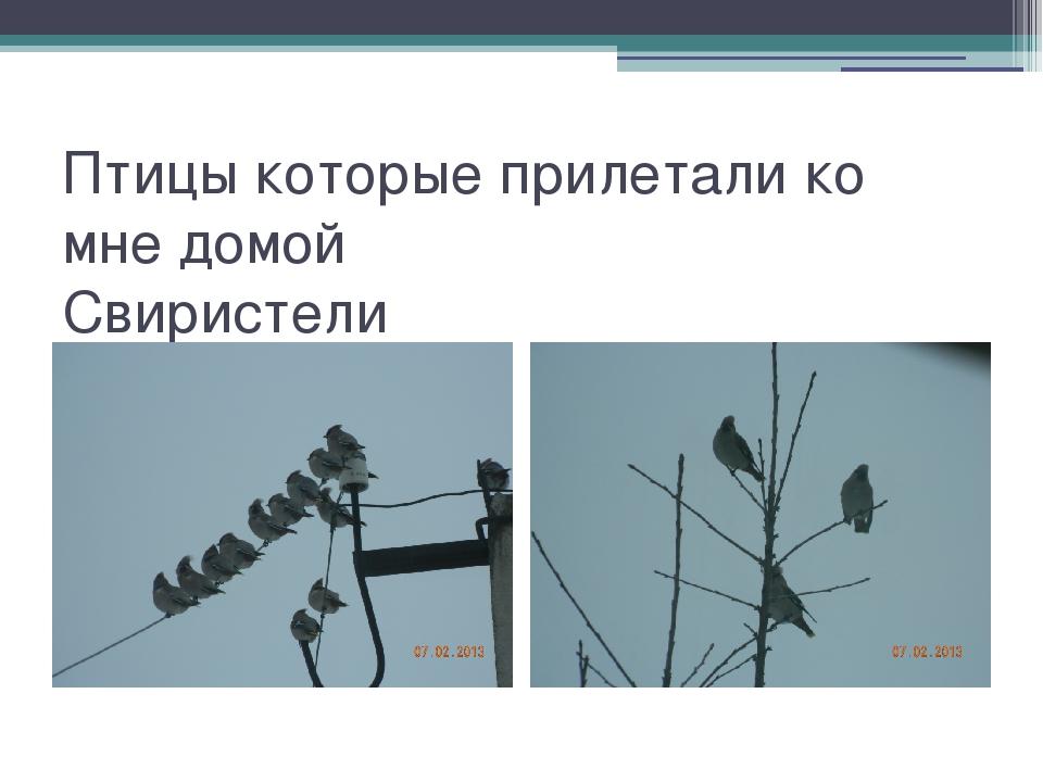 Птицы которые прилетали ко мне домой Свиристели