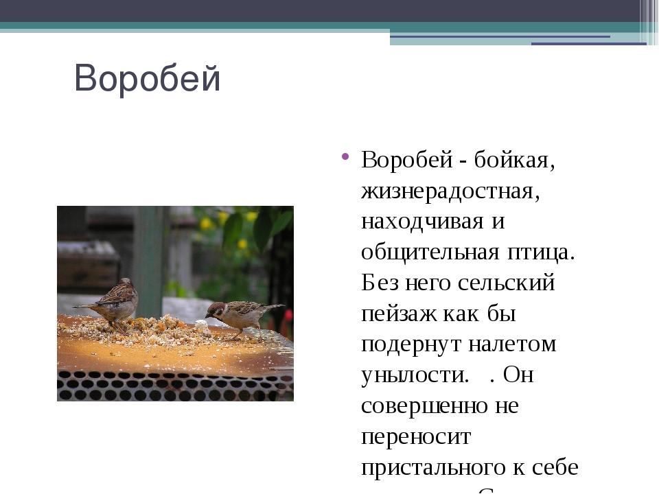 Воробей Воробей - бойкая, жизнерадостная, находчивая и общительная птица. Без...