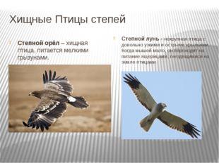 Хищные Птицы степей Степной орёл – хищная птица, питается мелкими грызунами.
