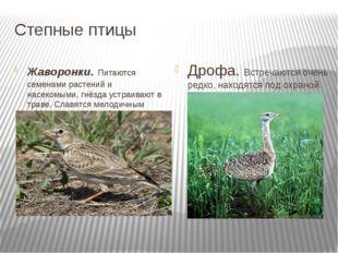 Степные птицы Жаворонки. Питаются семенами растений и насекомыми, гнёзда устр