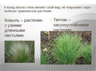 К концу весны степь меняет свой вид, её покрывают серо- зелёные травянистые р