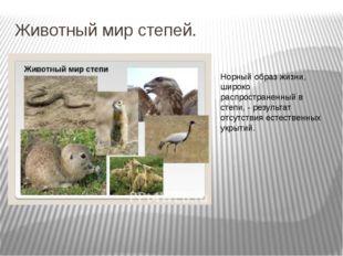 Животный мир степей. Норный образ жизни, широко распространенный в степи, - р