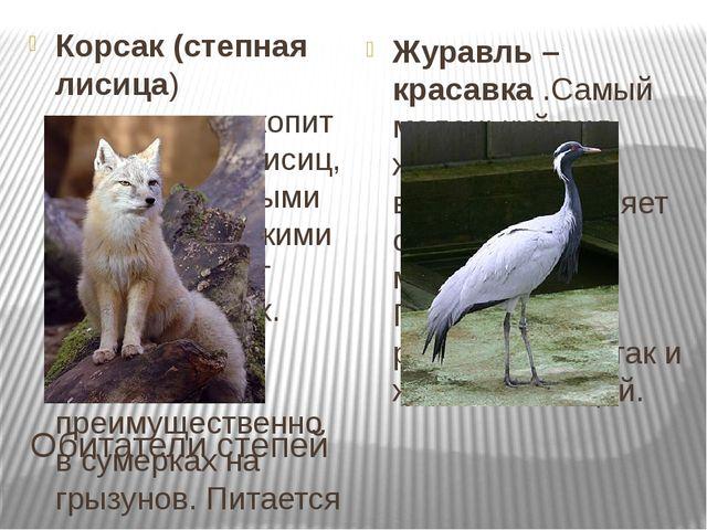 Обитатели степей Корсак (степная лисица) -хищноемлекопитающееродалисиц, с...