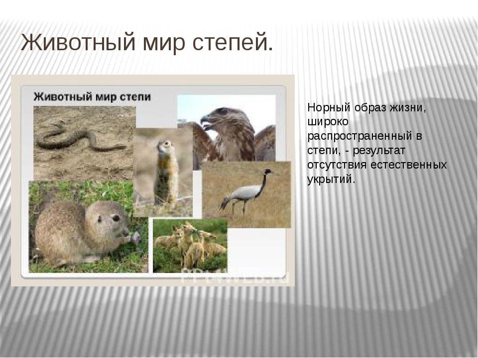 Животный мир степей. Норный образ жизни, широко распространенный в степи, - р...