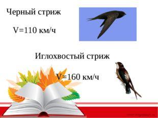 Черный стриж Иглохвостый стриж V=110 км/ч V=160 км/ч