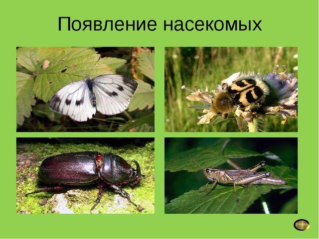 Появление насекомых; возвращение перелётных птиц