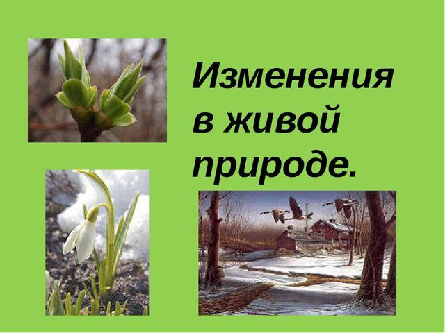 Изменения в живой природе Набухание почек. Появление листьев. Цветение расте...