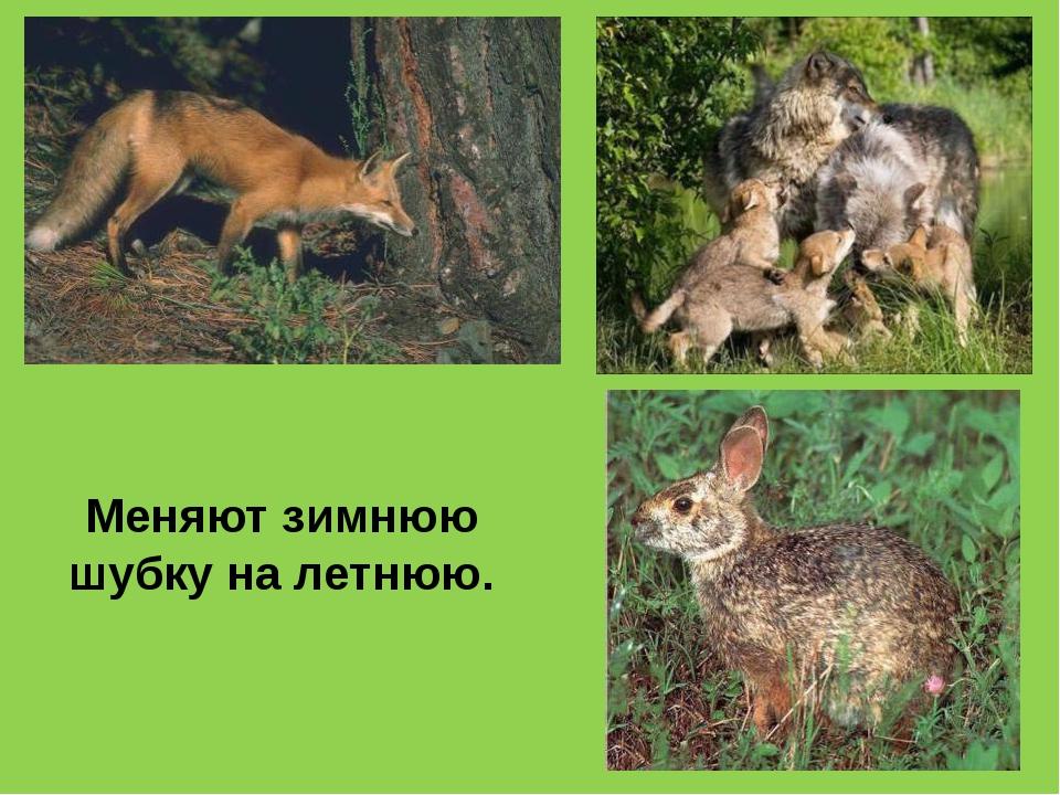 Береги природу!