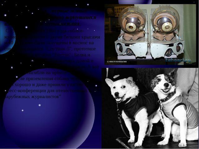 Белка и Стрелка - первые живые существа, благополучно вернувшиеся из космиче...