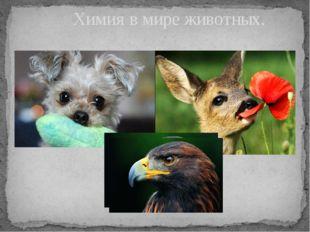 Химия в мире животных.