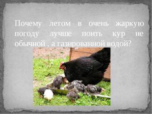 Почему летом в очень жаркую погоду лучше поить кур не обычной , а газированно