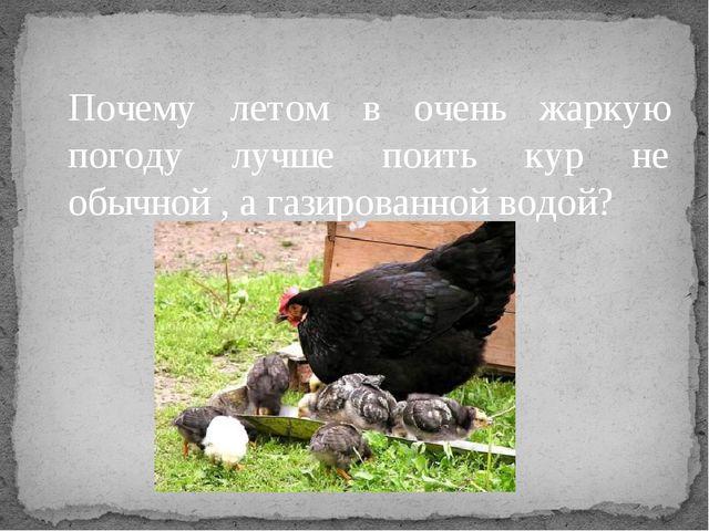 Почему летом в очень жаркую погоду лучше поить кур не обычной , а газированно...
