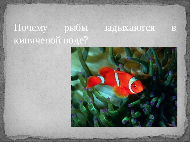 Почему рыбы задыхаются в кипяченой воде?
