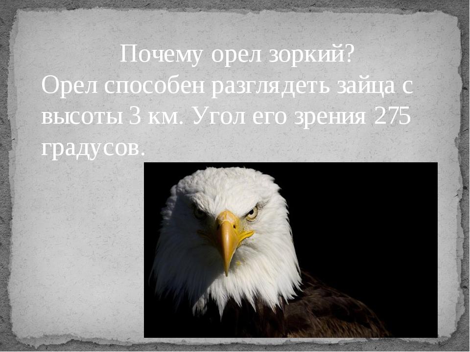 Почему орел зоркий? Орел способен разглядеть зайца с высоты 3 км. Угол его з...