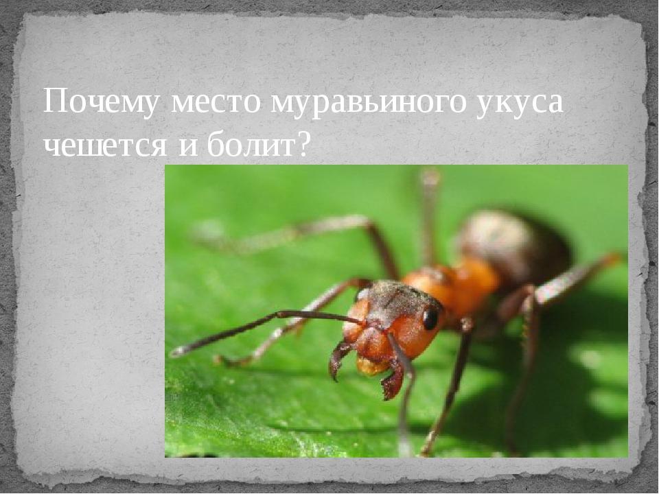 Почему место муравьиного укуса чешется и болит?