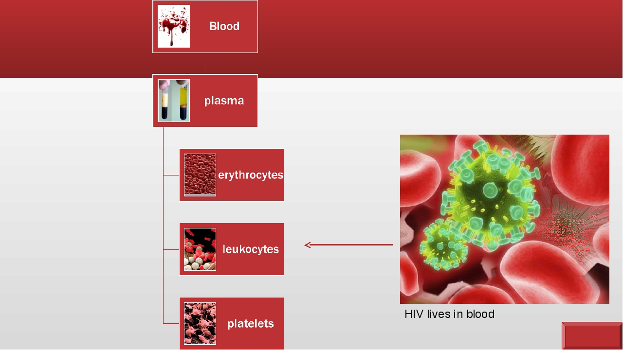 HIV lives in blood