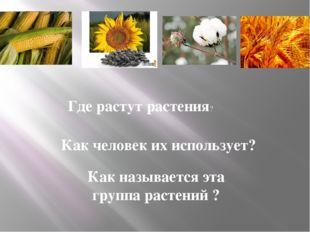 Где растут растения? Как человек их использует? Как называется эта группа ра