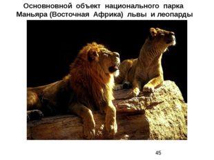 Основновной объект национального парка Маньяра (Восточная Африка) львы и леоп