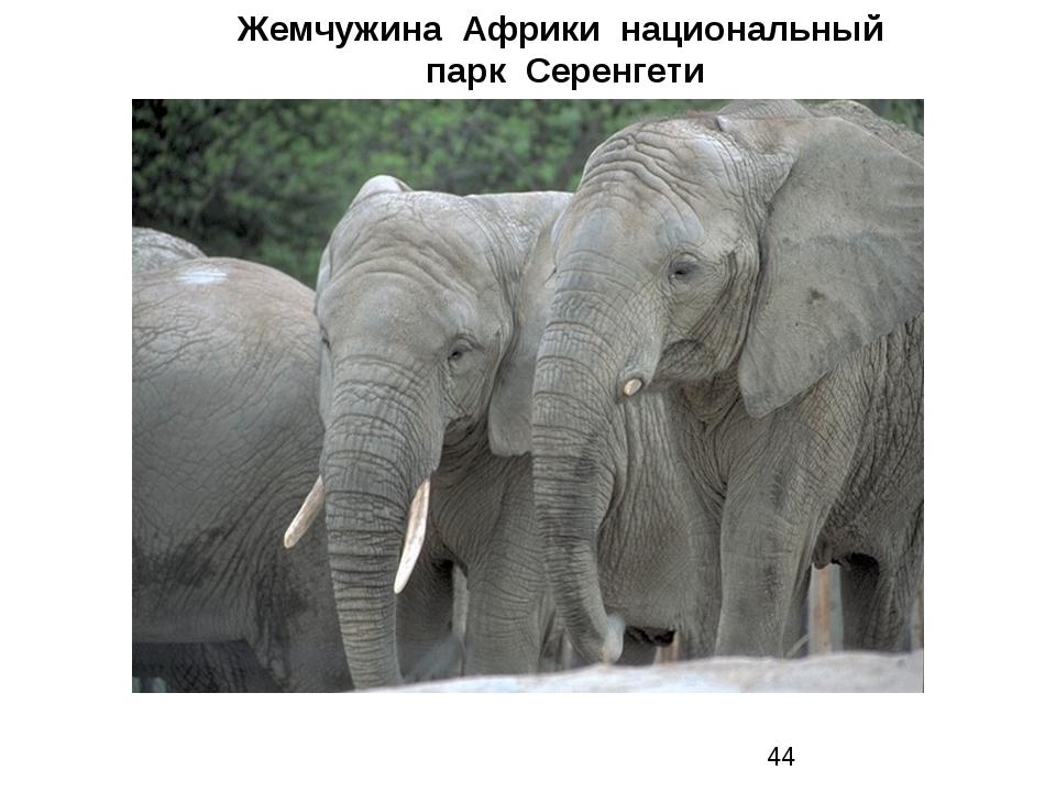 Жемчужина Африки национальный парк Серенгети Жемчужина Африки национальный па...