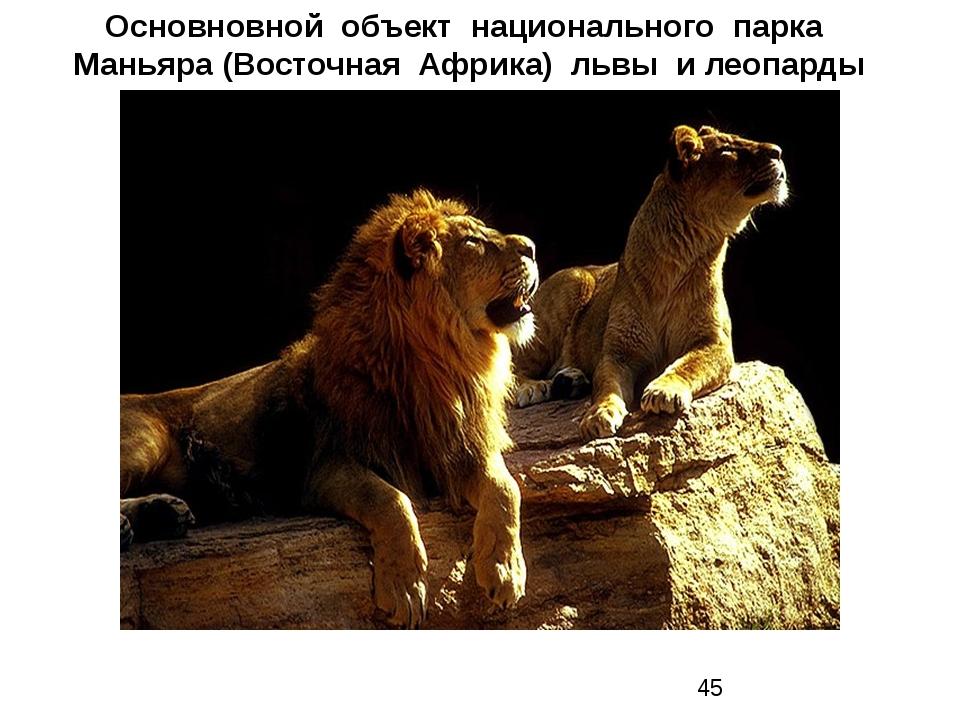 Основновной объект национального парка Маньяра (Восточная Африка) львы и леоп...