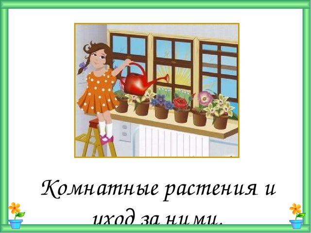 Комнатные растения и уход за ними.