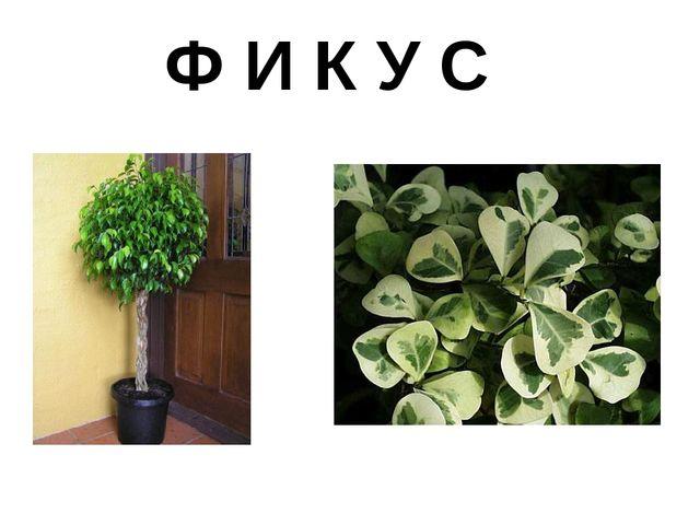 Ф И К У С