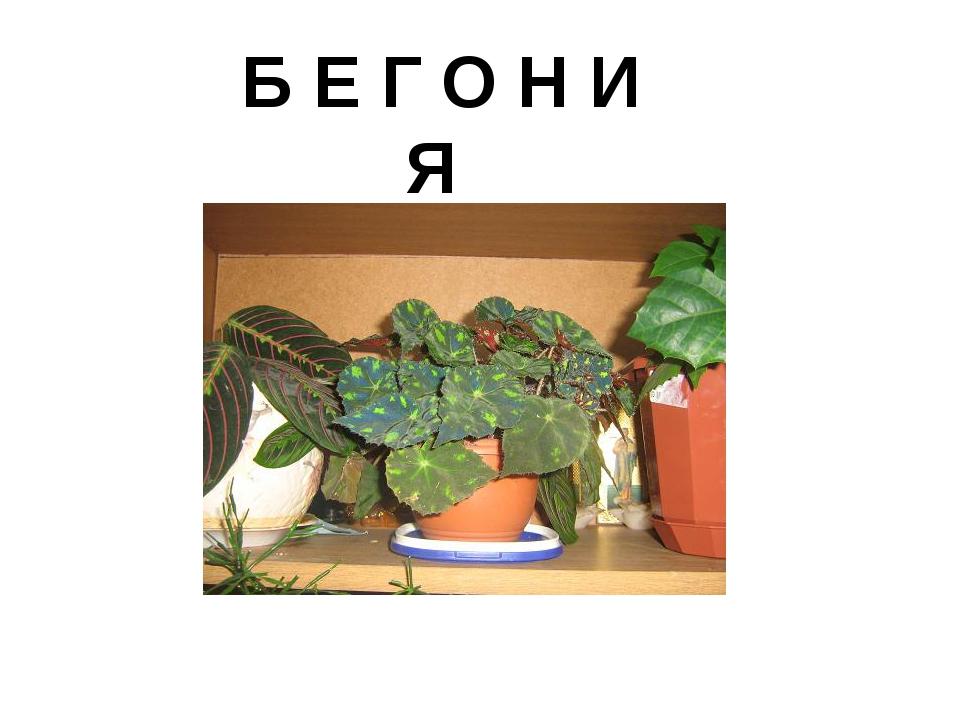 Б Е Г О Н И Я