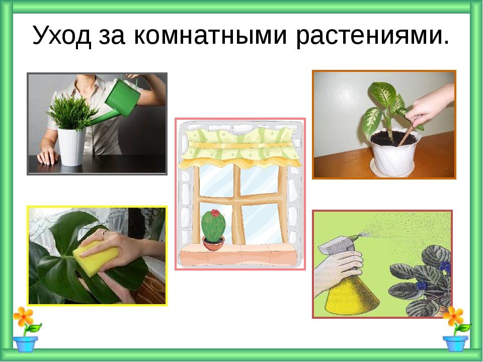 Уход за комнатными растениями.