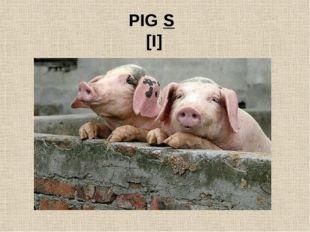 PIG S [I]