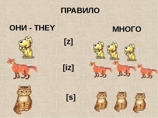 ПРАВИЛО ОНИ - THEY МНОГО [s] [z] [iz]