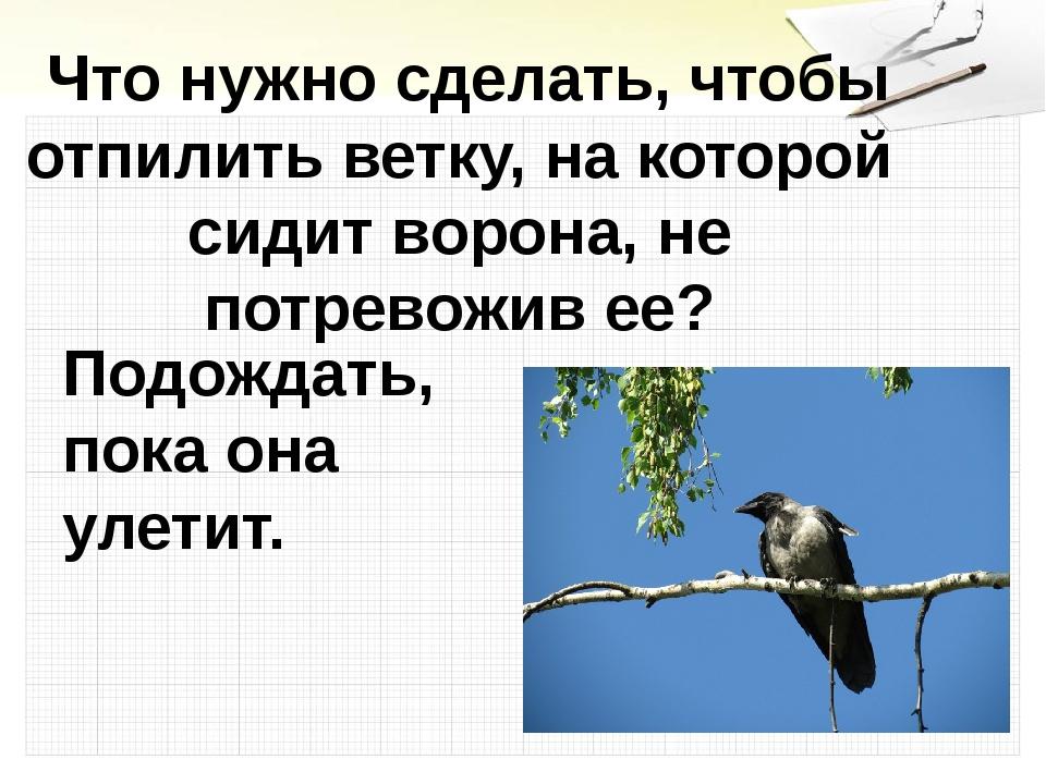 Что нужно сделать, чтобы отпилить ветку, на которой сидит ворона, не потрево...