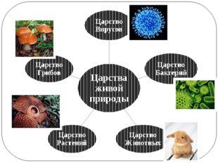 Царства живой природы Царство Вирусов Царство Бактерий Царство Животных Царст