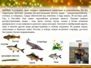 ФАУНА Калужского края обладает смешанным характером и разнообразна. По его те