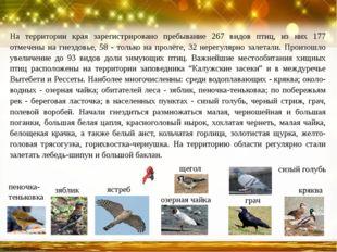 На территории края зарегистрировано пребывание 267 видов птиц, из них 177 отм